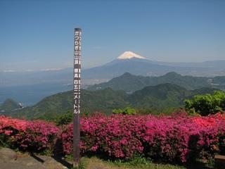 かつらぎ山ツツジ 伊豆の国市.jpg