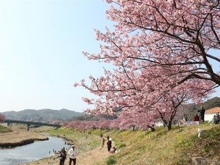 みなみの桜1.jpg