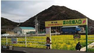 みなみの桜3.jpg