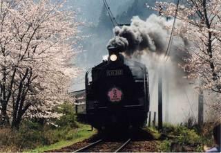 家山の桜とSL画像・島田市.jpg