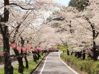 家山桜トンネル・島田市画像.jpg