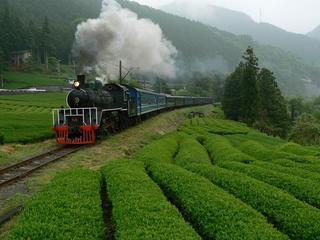 新緑の茶畑を走るSL.JPG