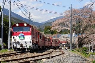春の井川線その2.JPG