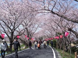 桜 藤枝市 3月号.jpg