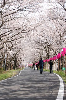 瀬戸川桜トンネル 藤枝市.jpg