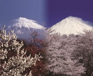 絶景☆富士山まるごと岩本山写真.jpg